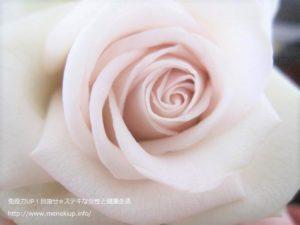 切り花のローズバラ